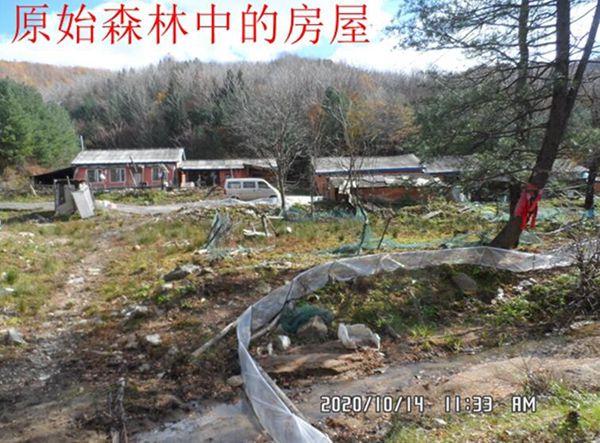 白石山林业局干部养蛙破坏植被,林业局称已经处罚